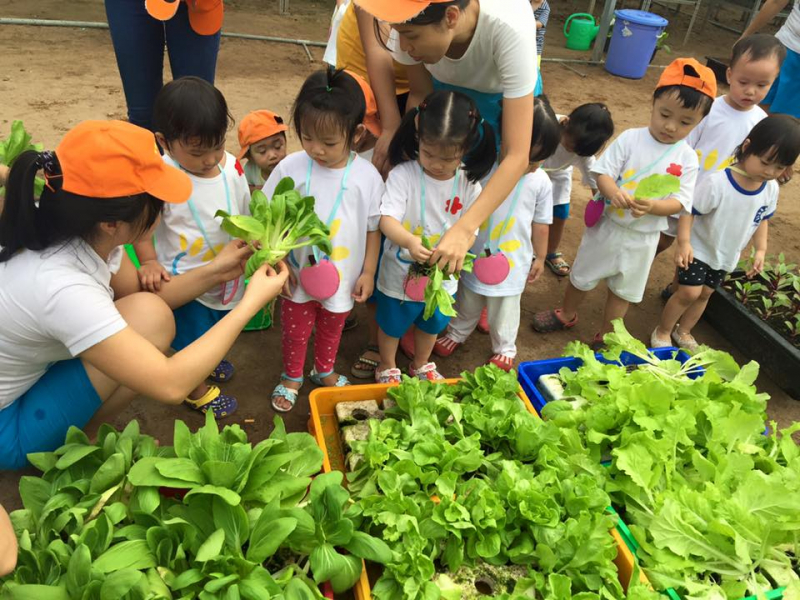 Các bé được học cách thu hoạch rau tại Nông Trại Cánh Cam