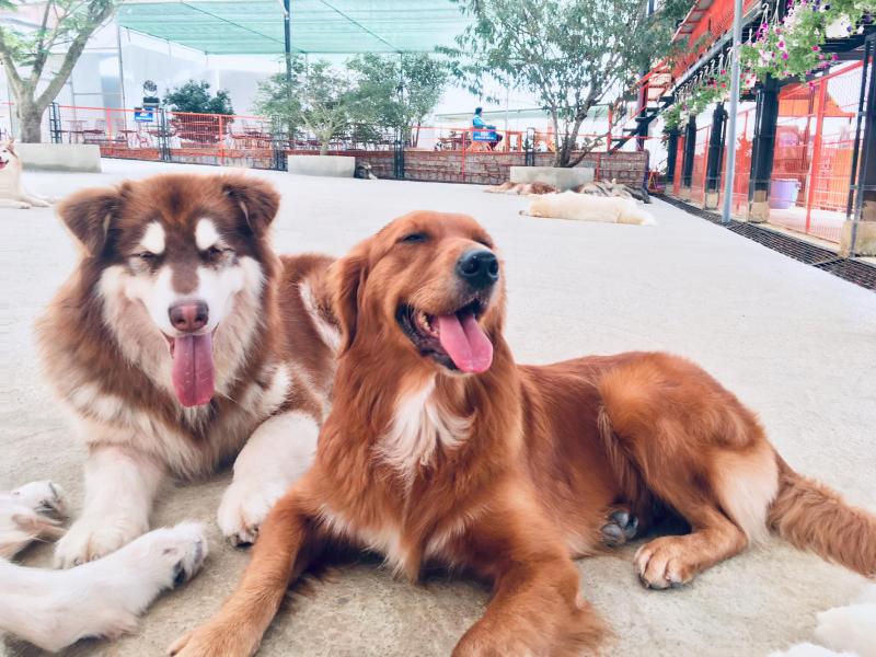 Nông Trại Cún - Puppy Farm