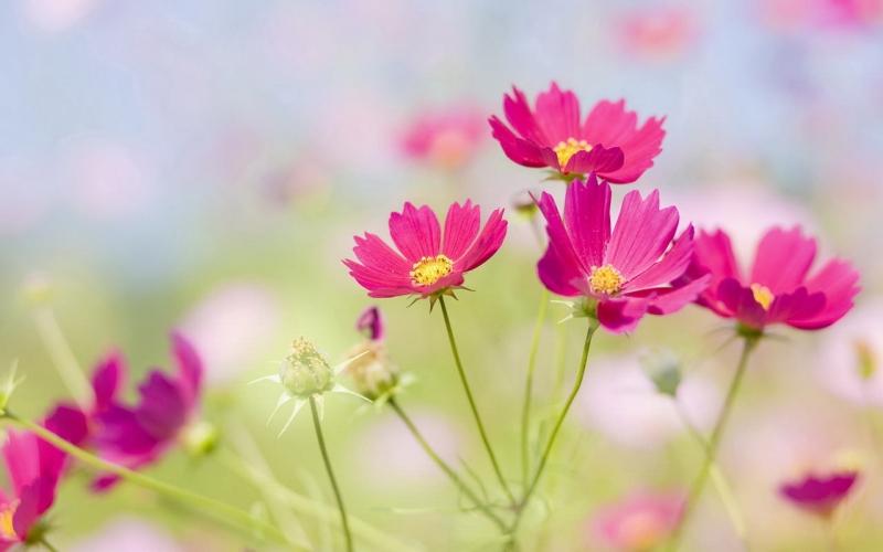 Hoa yêu mọi người, nên hoa kết trái