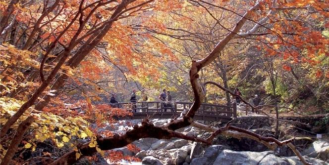 Vào mùa thu cây lá vàng, lá đỏ thi nhau nở rộ trên ngọn núi Jirisan