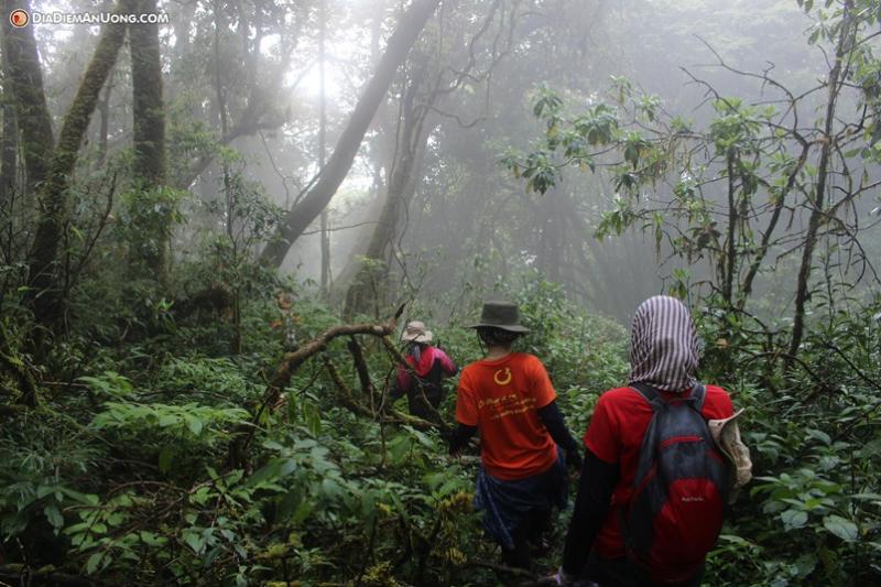 Những nhà leo núi vượt rừng sâu