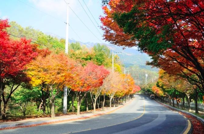 Con đường mùa thu dưới chân núi Palgongsan