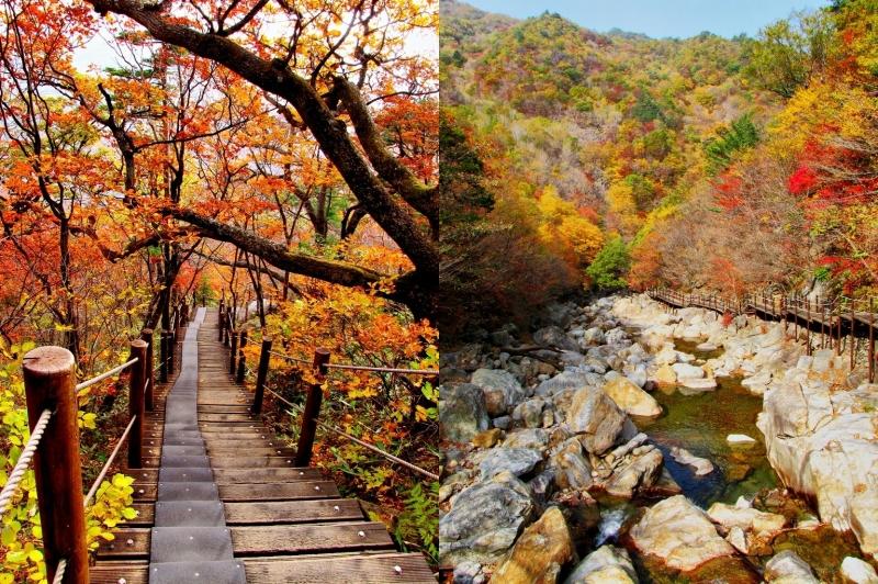 Mùa thu trên ngọn núi Seoraksan