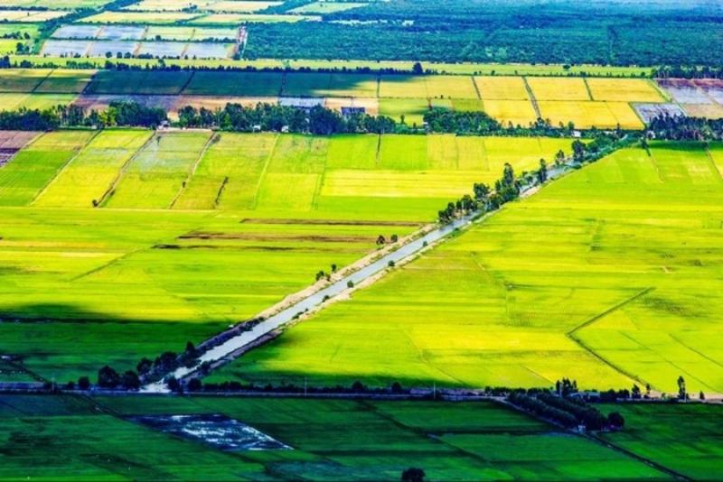Ta Pa fields are immense