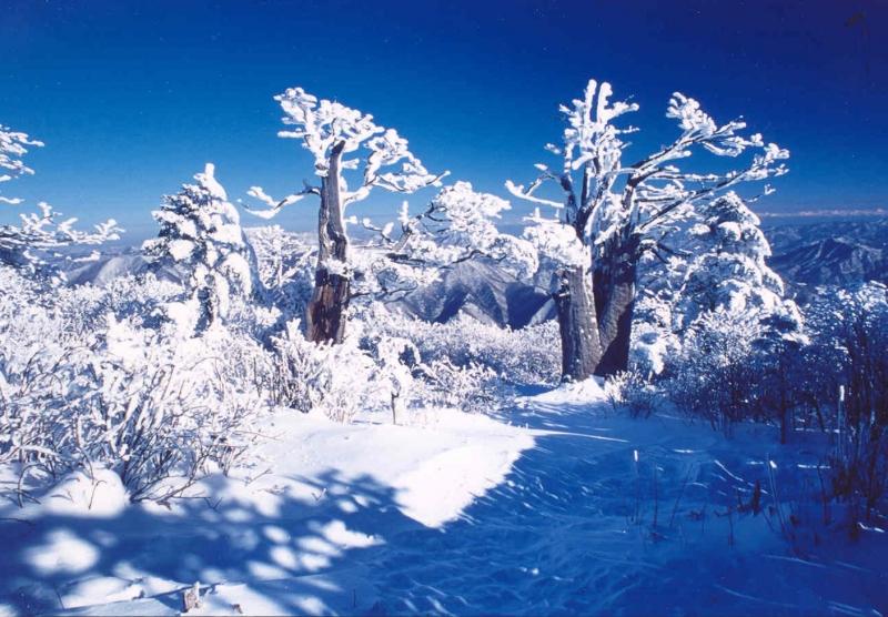 Núi Taebaeksan khoác trên mình chiếc áo tuyết trắng lung linh