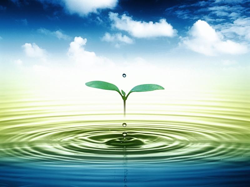 Hạn chế nước giúp kiềm hãm sự phát triển của cây