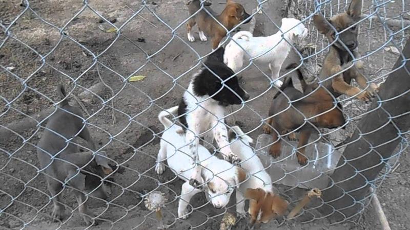 Nhu cầu thịt chó thương phẩm rất lớn