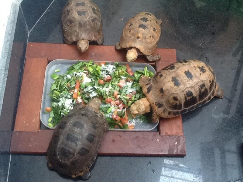 Tốt nhất là bạn không nên nuôi rùa ở phòng khách