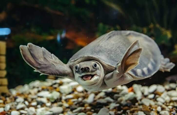 Không nuôi rùa nơi phòng khách