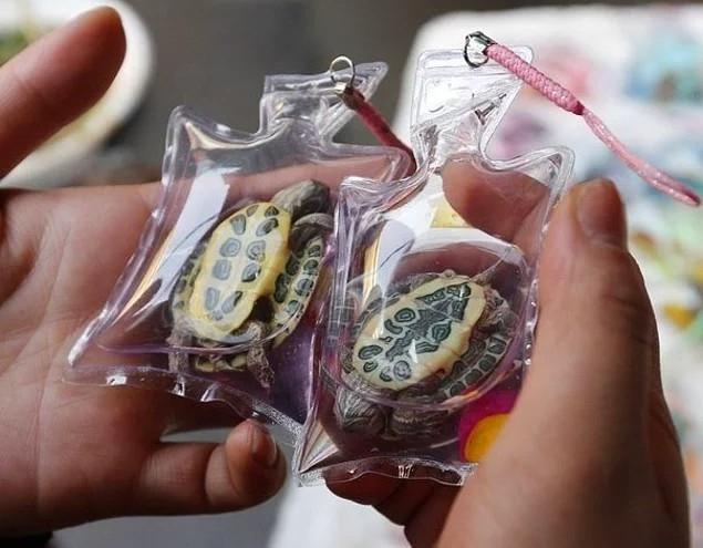 Ở Trung Quốc, bán dây đeo chìa khóa với các con rùa bên trong