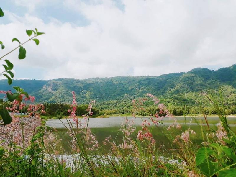 Những bụi cỏ hồng ven hồ Ô Tức Sa