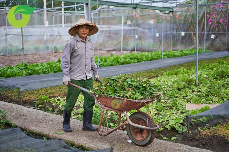 Nông trại Organica