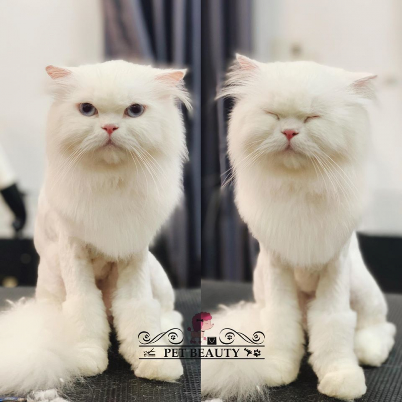 Pet Beauty