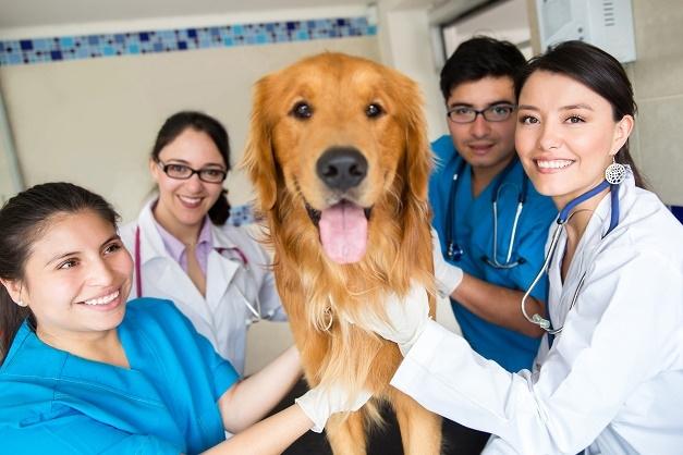 Pet Care Vũng Tàu là một trong những địa chỉ tư vấn và khám chữa bệnh cho thú cưng uy tín, chất lượng