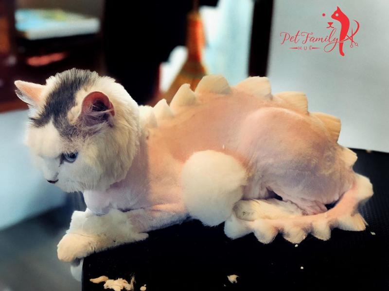 Pet Family Huế