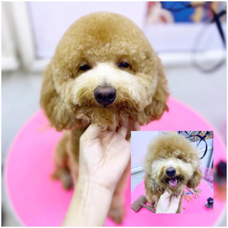 Pet Love - Tình yêu thú cưng