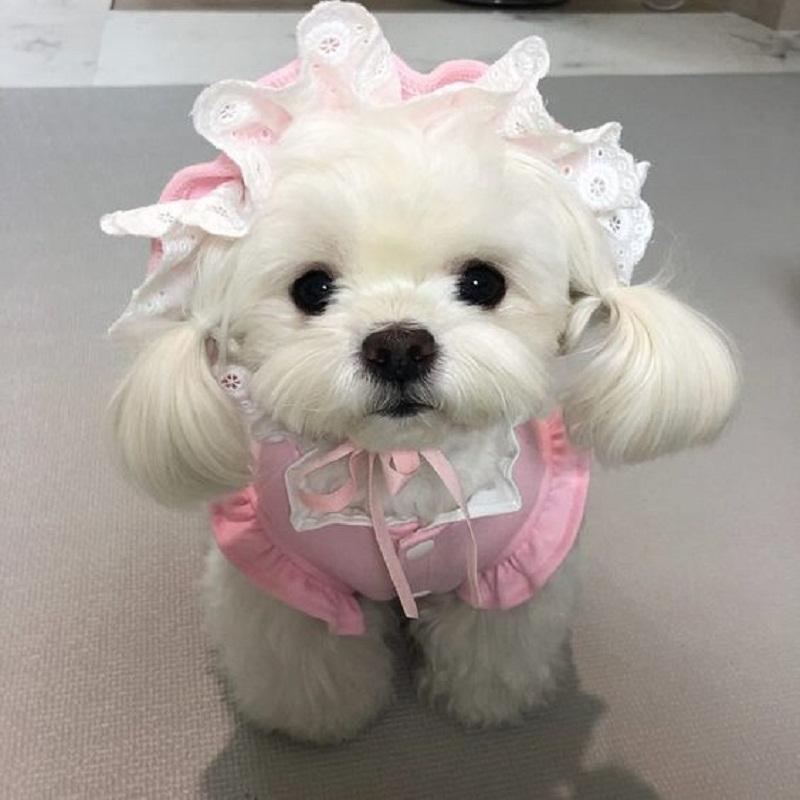 Trông tớ đã đi thi hoa hậu được chưa nào?