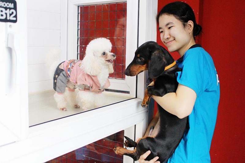 Pet Mart dịch vụ trông giữ thú cưng ngày Tết tại TPHCM uy tín nhất