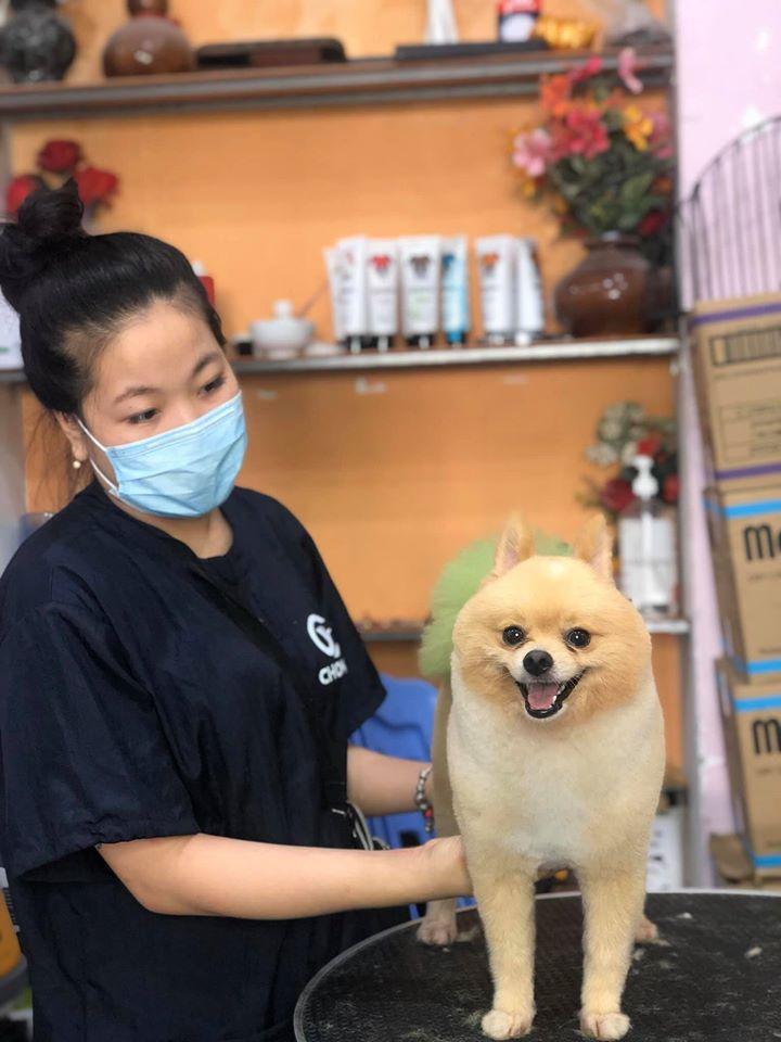 Pet Mini Shop