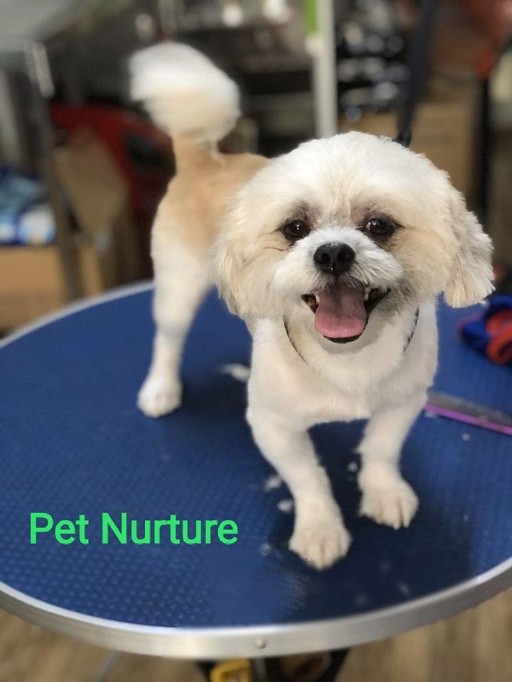 Pet Nurture