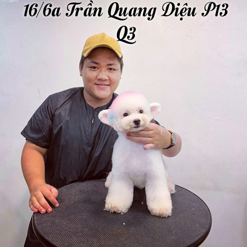 Pet Service - spa and grooming