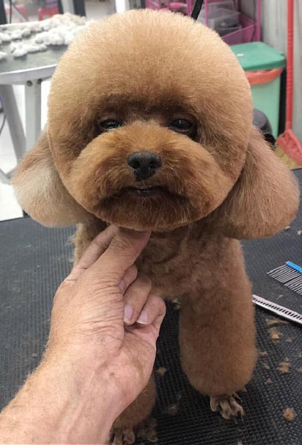 Cắt tỉa lông cho thú cưng
