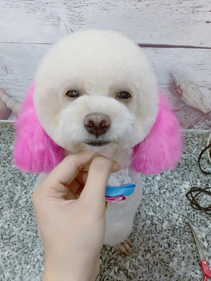 Petshop lúc lắc - Dịch vụ thú cưng TPHCM