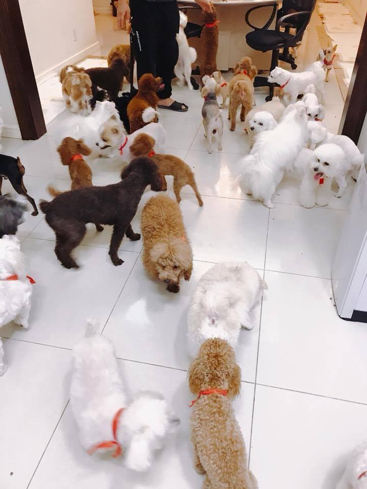 Pet shop Thú kiểng