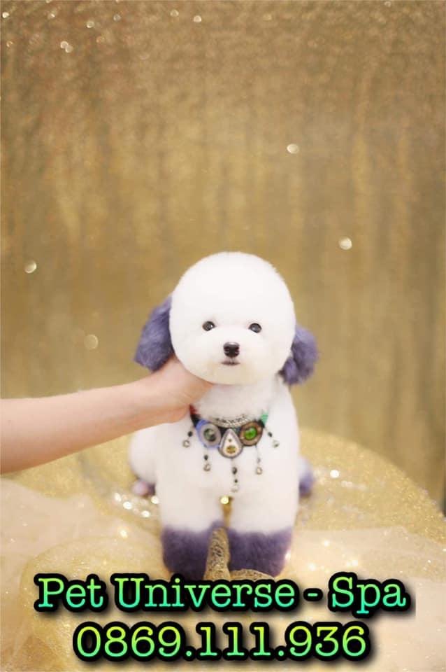 Pet Universe - Spa & Pet Shop