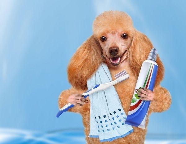Dịch vụ chăm sóc thú cưng tại PetCity