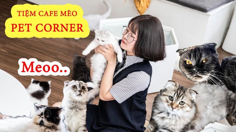 Top 7 Quán cà phê có chó mèo được yêu thích nhất Đà Lạt