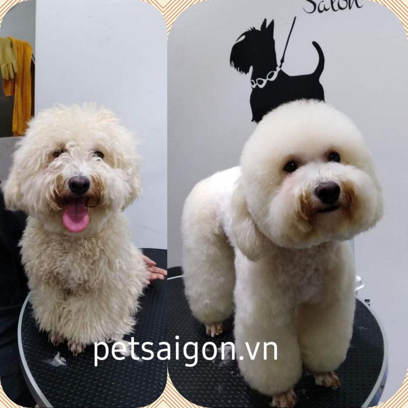 Petsaigon.vn
