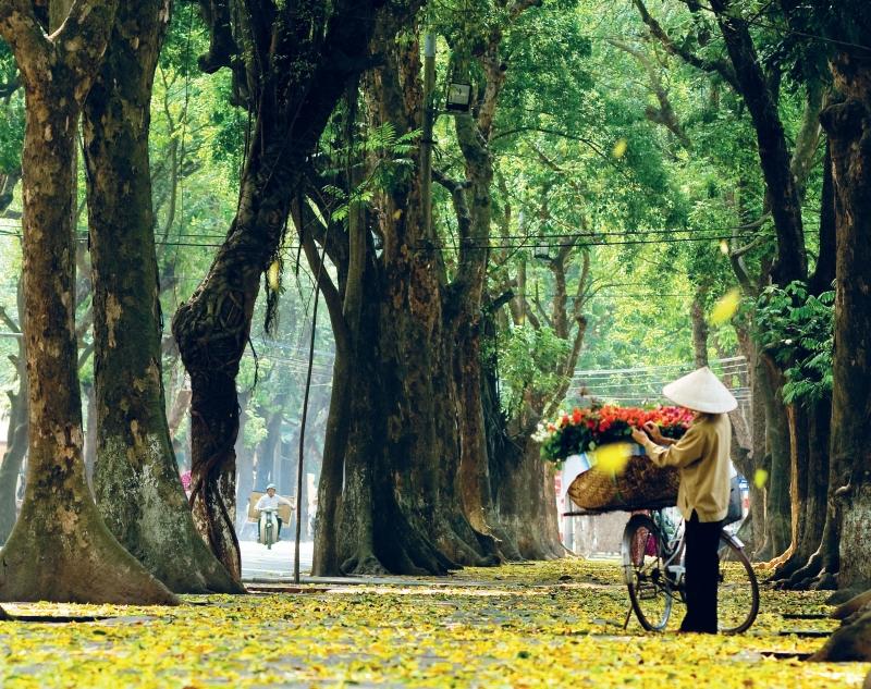 Đường Phan Đình Phùng trải đầy lá vàng mùa thu
