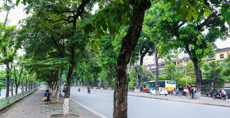 Golden Horse Street