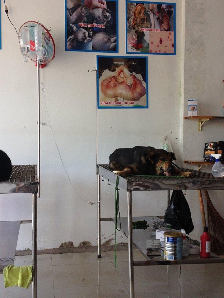 Phòng khám đa khoa thú y One Vet