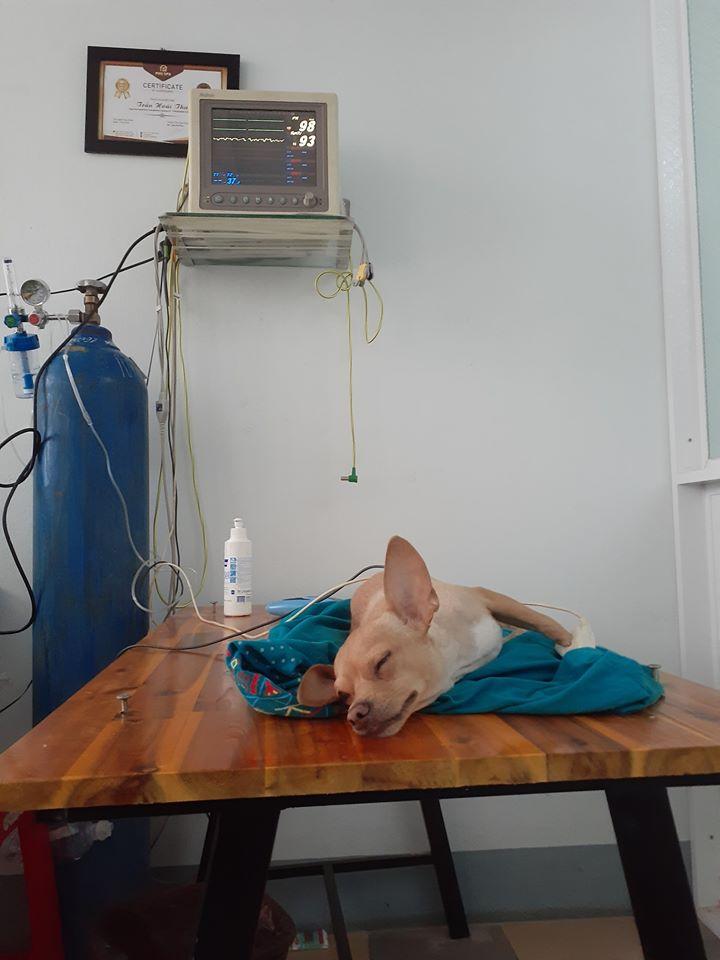 Phòng Khám Pet Health