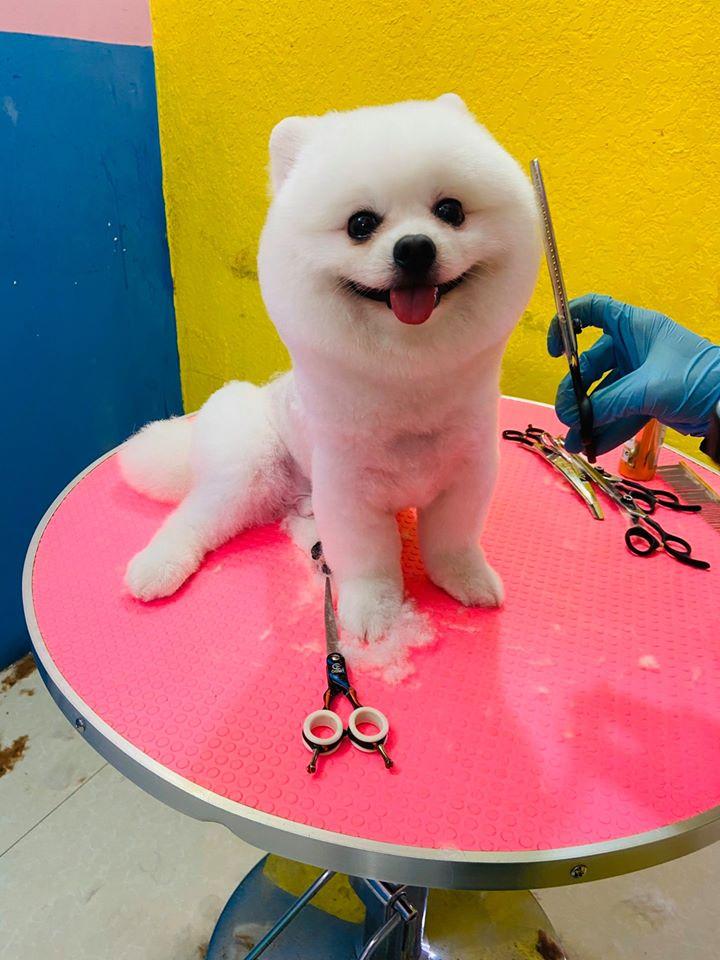 Phòng Khám Thú Y HP Pet Tuy Hòa