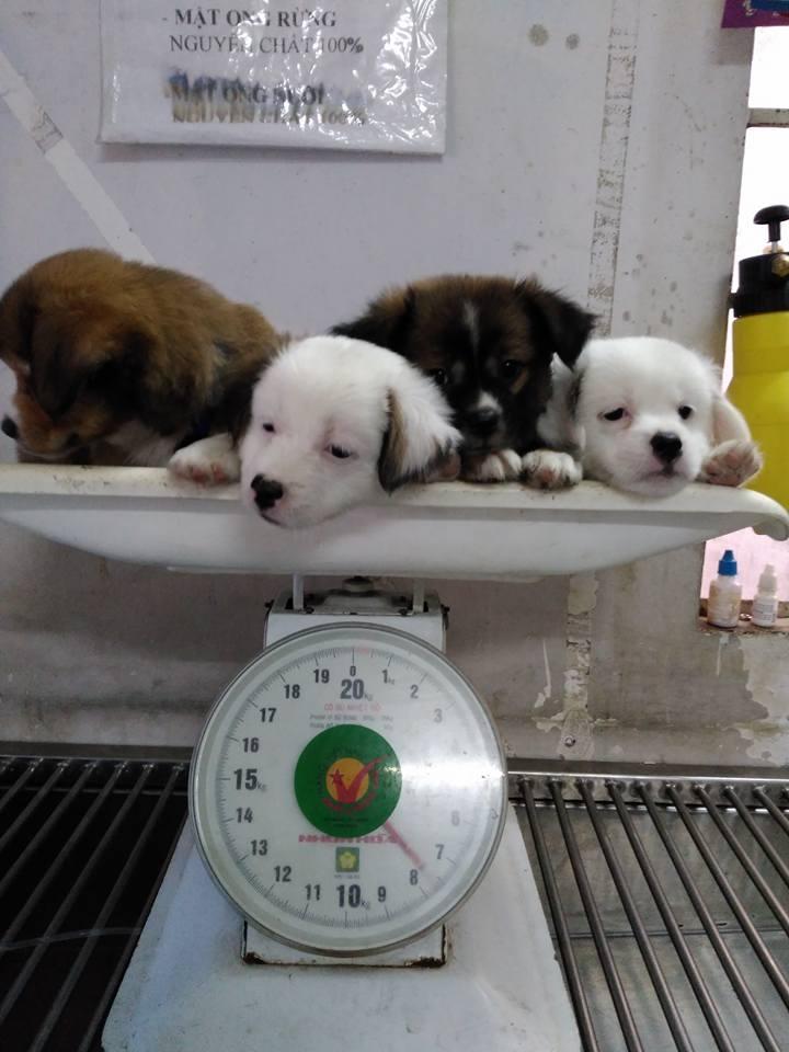 Phòng khám thú y Lucky Pet Clinic