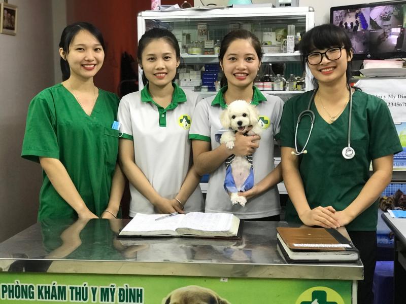 Khám miễn phí cho thú cưng tại phòng khám thú y Mỹ Đình