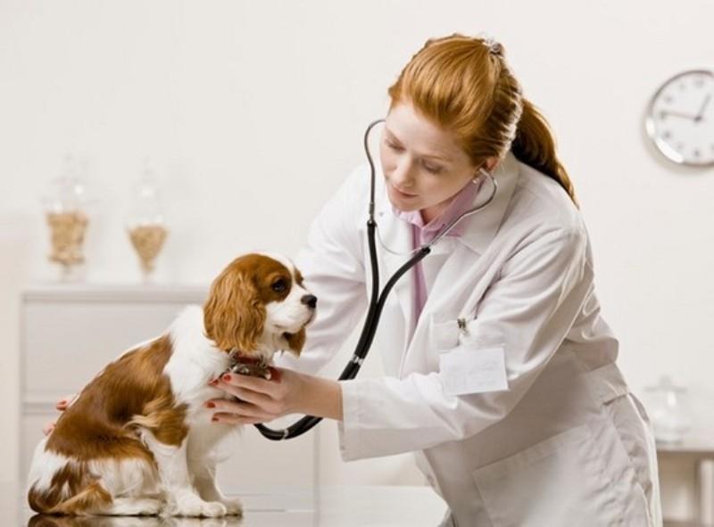 Phòng khám thú y Nam Bình chắc chắn sẽ khiến bạn hài lòng khi lựa chọn làm điểm đến cho thú cưng