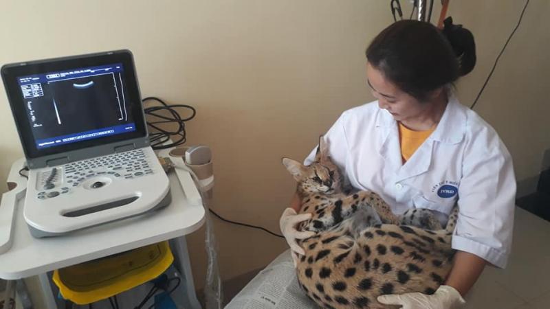 Top 4 Phòng khám thú y uy tín nhất tại Nha Trang