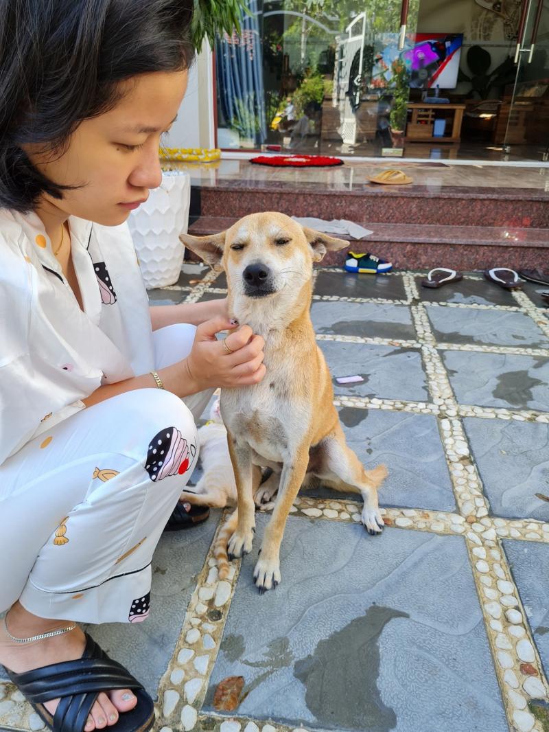 Phòng khám thú y Nha Trang Vet Clinic