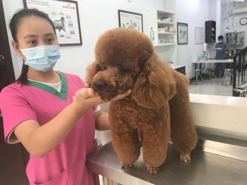 Phòng khám và Chăm sóc thú cưng Belwee