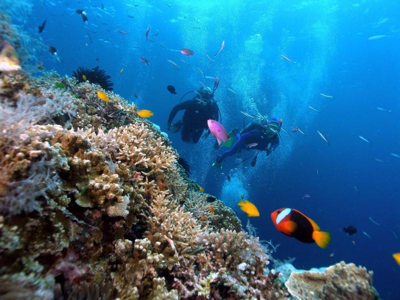 Các cặp đôi cùng nhau ngắm san hô dưới biển