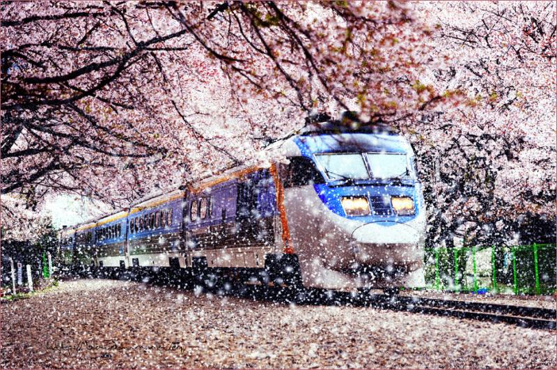 Phương tiện di chuyển qua Hàn Quốc và vòng quanh Hàn Quốc