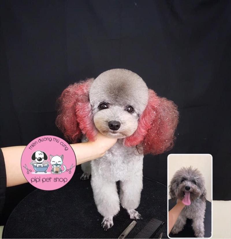 PiPi Pet Shop