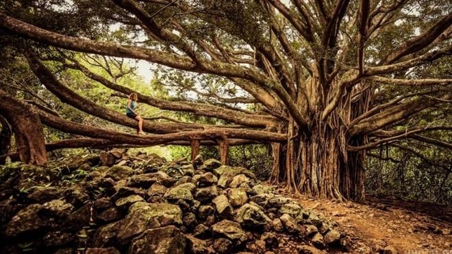 Pipiwai, Hawaii, Mỹ