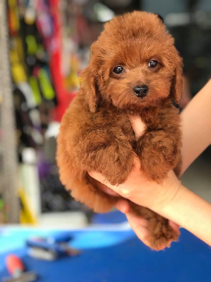 PT Pet Shop