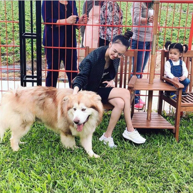 Puppy Farm là một trong những quán cà phê thú cưng được yêu thích nhất Đà Lạt