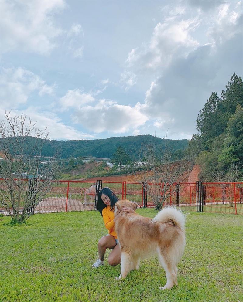 Những chú chó thân thiện và dễ thương